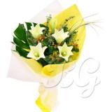 BG_HBQ00066(Lily)