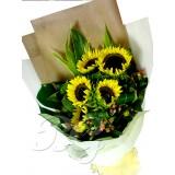 BG_HBQ00151(Sunflower)
