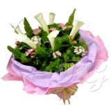 BG_HBQ00156(Lily)