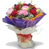 BG_HBQ0062(Carnation)